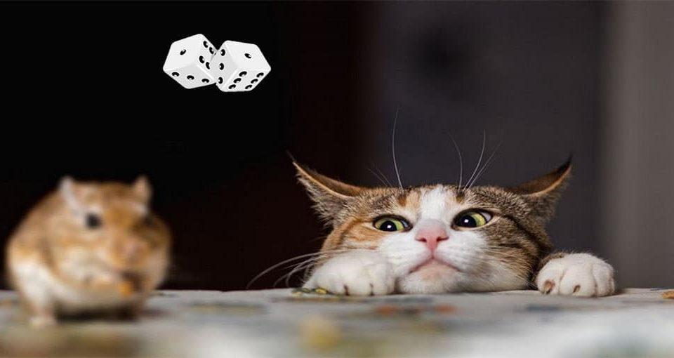 بازی ریاضی موش و گربه